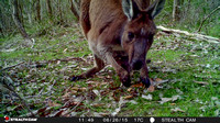 Stealthcam Selection